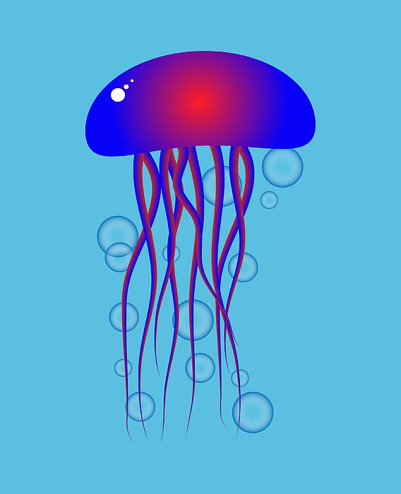 Jellyfish by Keith Hawley